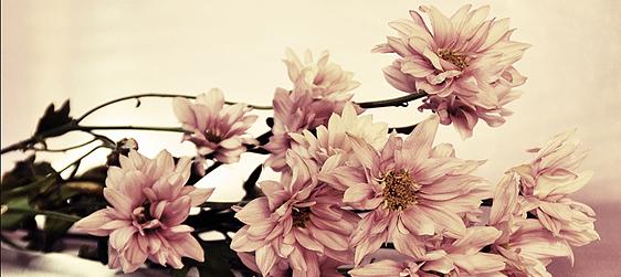 طريقة تصوير  Hug Flowers