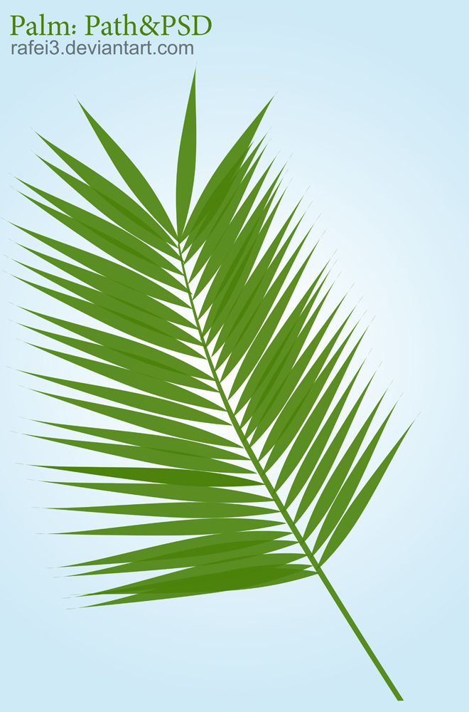 Palm PSD Path